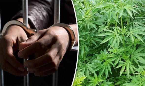 arresto a seguito della coltivazione illegale