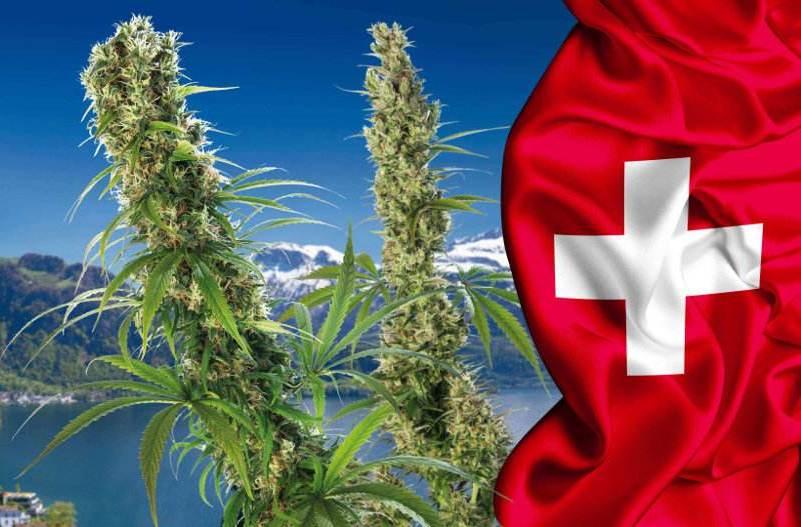 canapa legale e svizzera