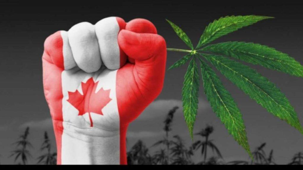 foglia di canapa e bandiera canadese