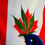 bandiera canada con foglia di canapa