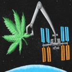 cannabis sulla iss