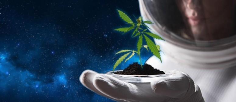 pianta di cannabis nello spazio
