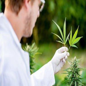 medico con foglia di cannabis