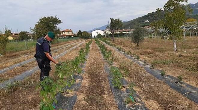 piantagione sequestrata polizia